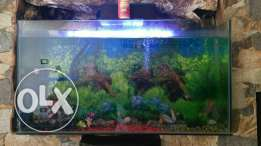 90x50x25 cm fish tank woth decoration and fish