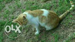 """cat and his name is """"bisi bseyne"""""""