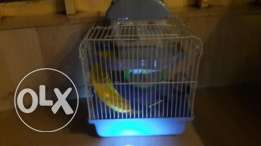 Cage of hamster for sale