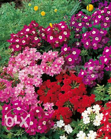 Offer of the week . All plants at 1000l.l