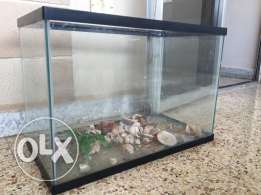 aquarium for sale 60x30 cm
