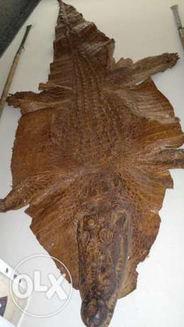 Crocodile body african origin B.Faso