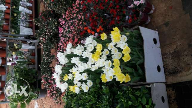 all kinds of trees ,plants and flowers for sale