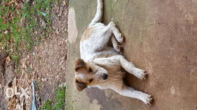 A 4 month dog for sale