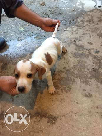 For sale pointer