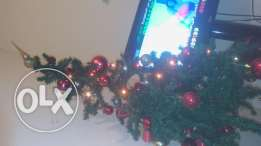 Christmes tree for sale