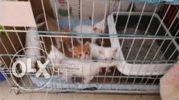 For sale cats
