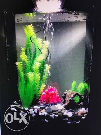 aquarium birob, original price 450,