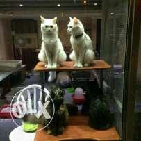 All cind of cats