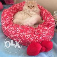 Hello Kitty beds for dogs and cats