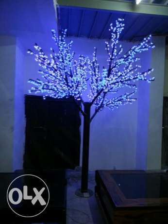 Lighting trees.