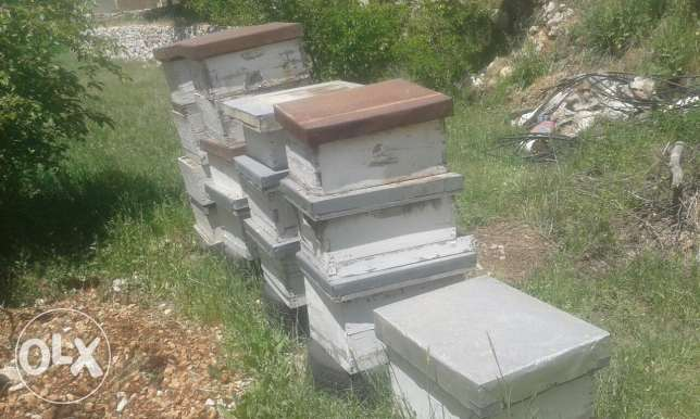 Bees byout nahel