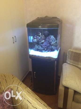 salt water Aquarium with sump,protein skimmer without live rock,