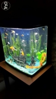 Very nice equarium with all stufs and fishes