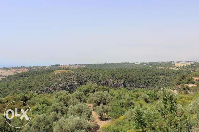 Land for Sale in Dibbiye