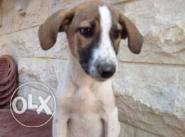 dogs for sale 1female 1male