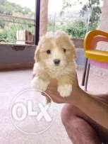 Dog have 50 days cute