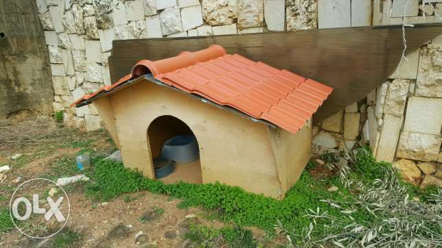 House for dogs