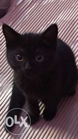 funny and friendly kitten
