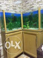 very stylish aquarium