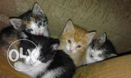 Little cats for sale