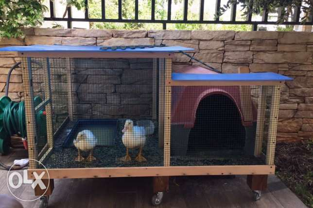 2 ducks and a Cage