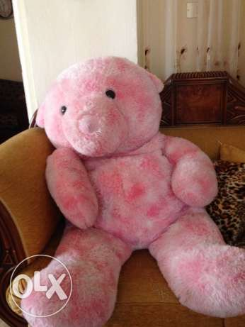 Bear pink for sale