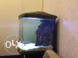 Salt water Aquarium with Fish with Accessories.