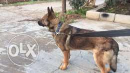working gsd