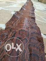 African snake leather 4m + tall
