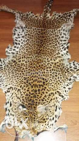 Real African  tiger skin