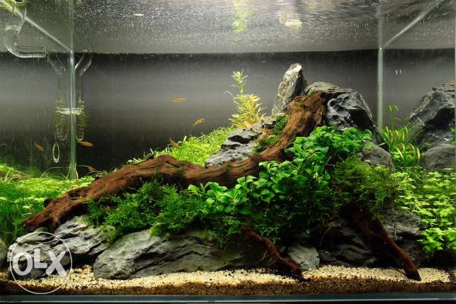 Aquarium for sale with all accessories
