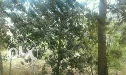 980 M land for sale in bdedoun