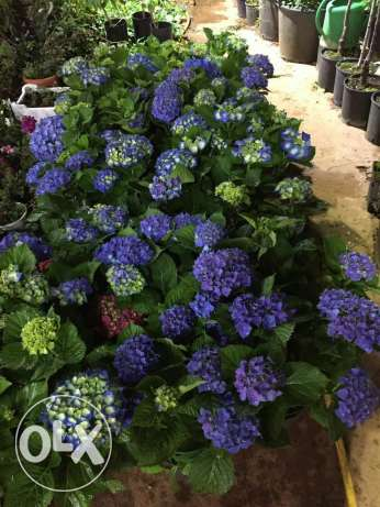 Come to check our new arrival. All flowers at 1$