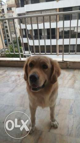 Rocky 4 sale ( GOLDEN )