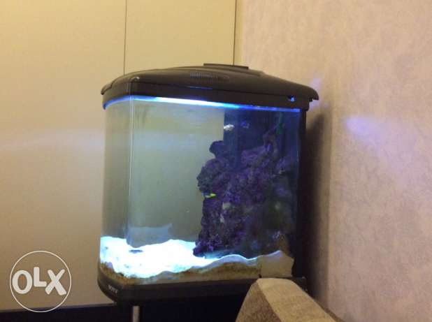 marine Aquarium with sump,protein skimmer, live rock,
