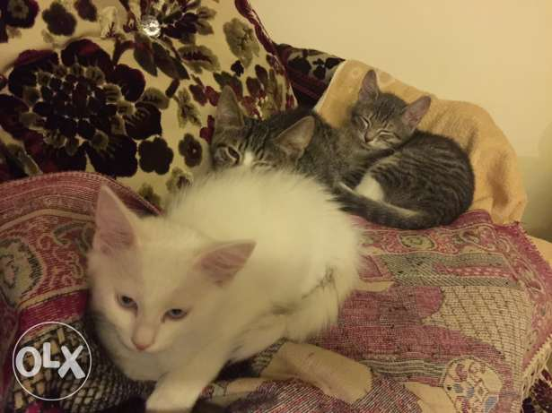 3 cats for sale