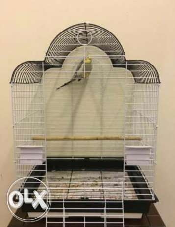 Parrot Cage / Afas bebagha / قفص ببغاء