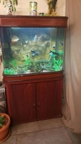aquarium 80 / 70 / 50 cm with all accessories