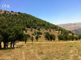 Land for sale akoura 55000meters