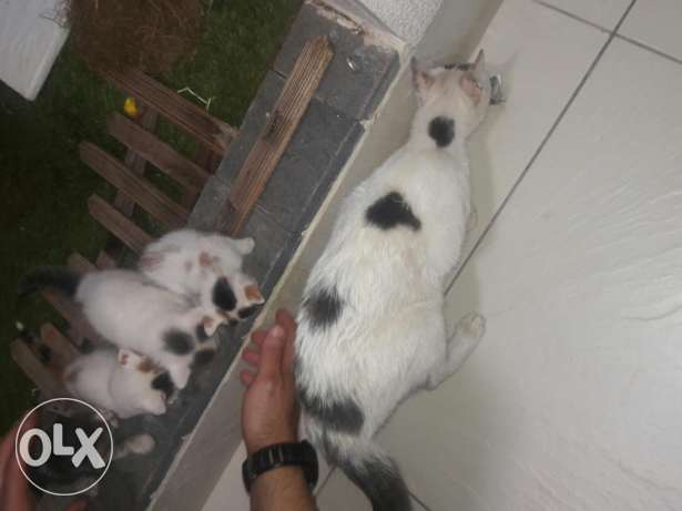 Kittens for sale less than one month old