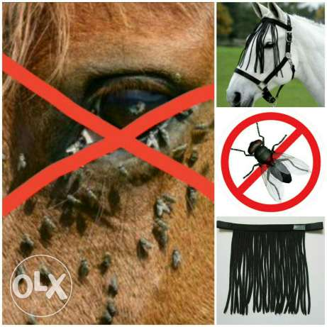 Fly Protection for Horse
