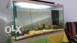 Aquarium for sail
