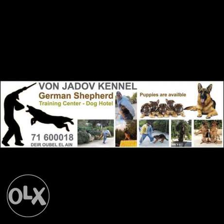 Von jadov dog training