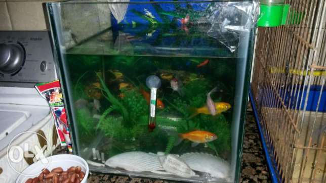 Fish and aquarium
