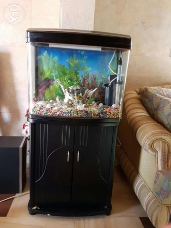 Fish aquarium like new